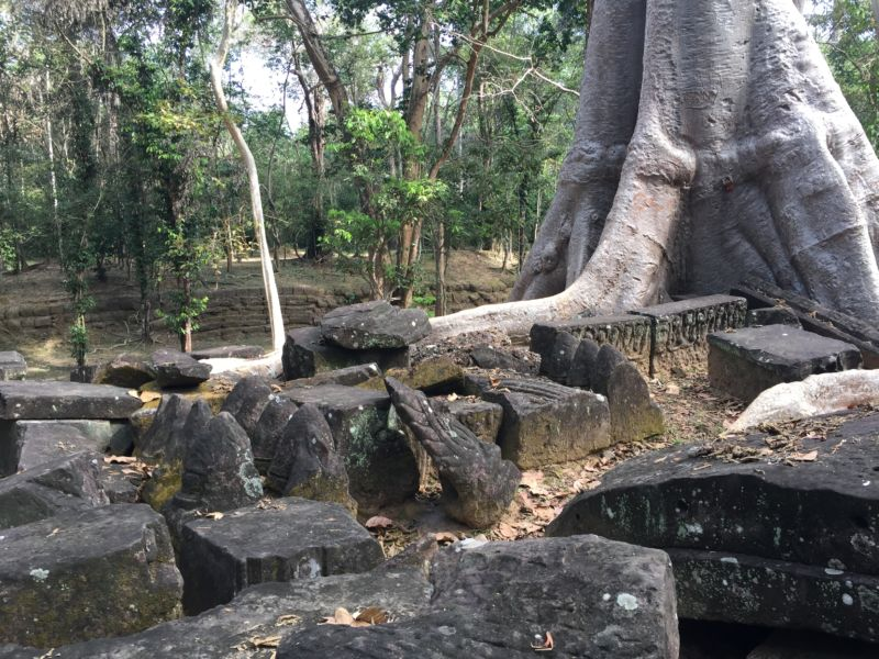 These are the relatively recent remains of an ancient temple in the tropical forest of Cambodia.